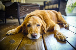 How Seniors Benefit From Adopting Senior Pets
