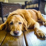 How Seniors Benefit From Adopting Senior Pets article thumbnail