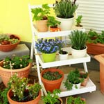 Patio Gardening For Seniors article thumbnail