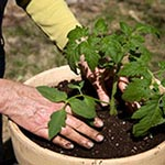 How to Do Container Gardening for Seniors article thumbnail