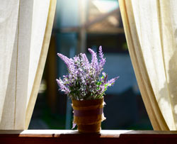 5 Plants To Keep In Your Bedroom